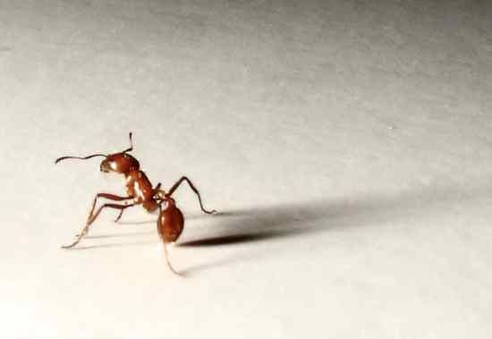 Getting Rid of and Killing Ants w/ Non-Toxic Products.   Peanut Butter and Borax, and then many other remedies.  Home Remedy Central