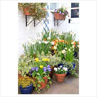 Small courtyard garden with masses of containers with bulbs