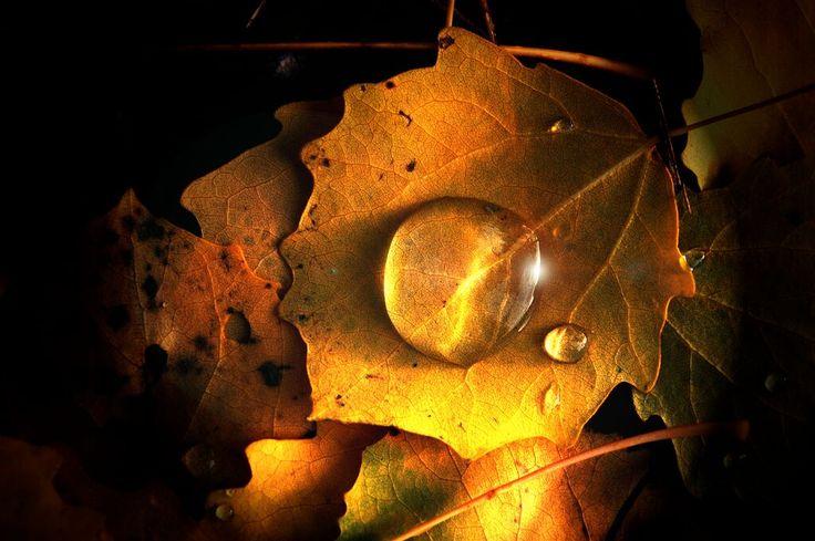 Dropbox - golden drops#2.jpg