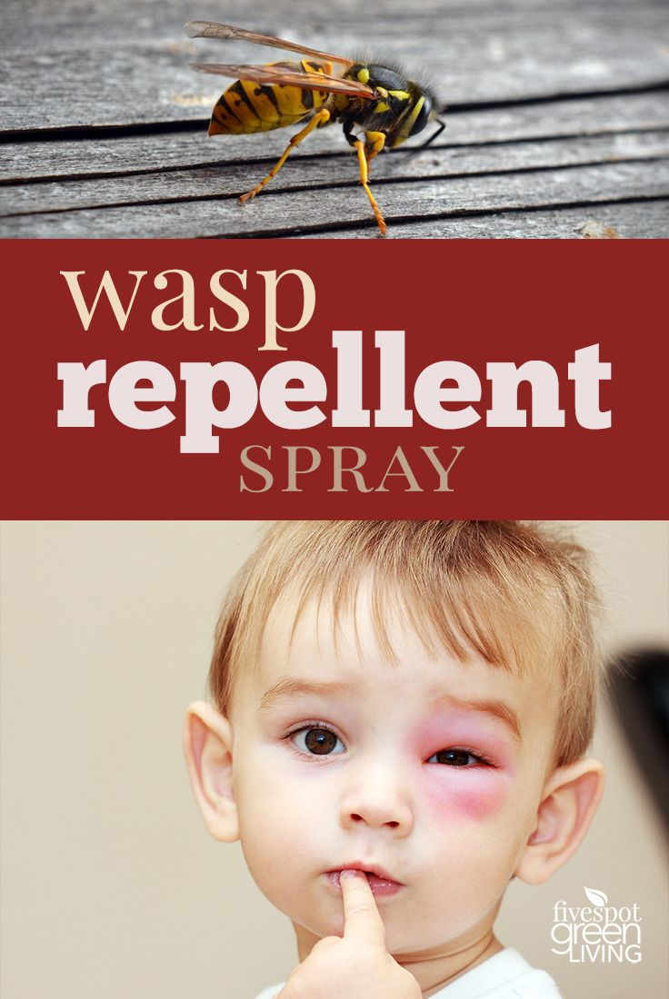 Wasps are mean but still beneficial! Keep them away without killing them with this effective essential oil wasp repellent that is proven to work.