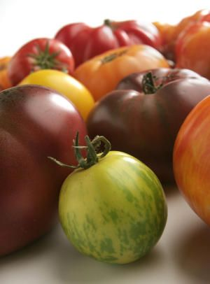 UCCE Master Gardeners: Debunking the myths about growing tomatoes
