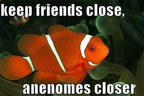 Biology + puns = Two wonderful things.