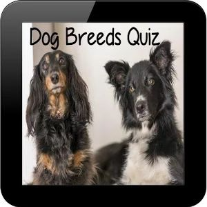Dog Breeds Quiz: https://play.google.com/store/apps/details?id=com.list.dogbreedsquiz #dogs #dogBreeds