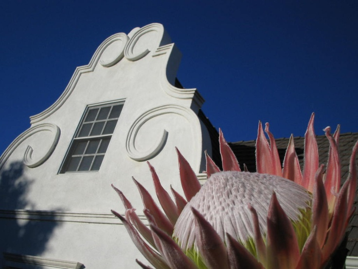 Cape Dutch Architecture & South African Flora