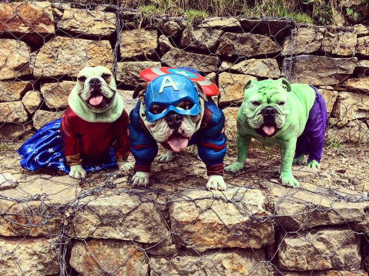 Disfraz Mujer Maravilla, Capitán América y Hulk