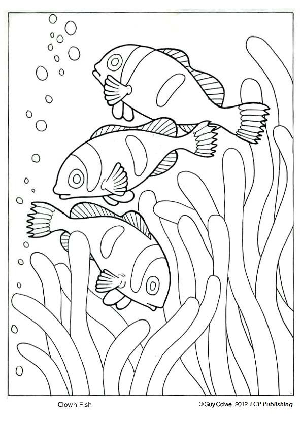Clown Fish Coloring Ocean Animal Pages