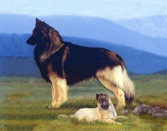 Tervuren Belgian. Dogs are a little too photoshopped, but the charbonage on the male adult is beautiful.