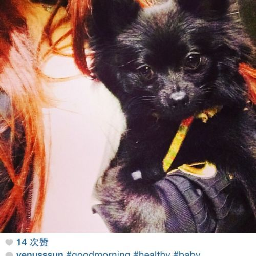 LOST:Baby http://ow.ly/FS9U1 Male Black Pomeranian #NobleParkNorth #Melbourne #LostDogNobleParkNorth #LostDogMelbourne #LostPetFinders