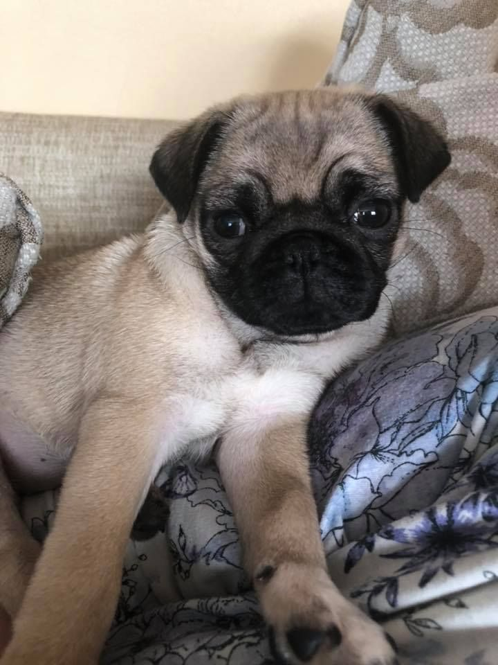 Hi Everyone So Our Puppy Flora Is 11weeks Tomorrow Just Wanted