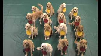Dogs Teaching Chemistry - Chemical Bonds - YouTube
