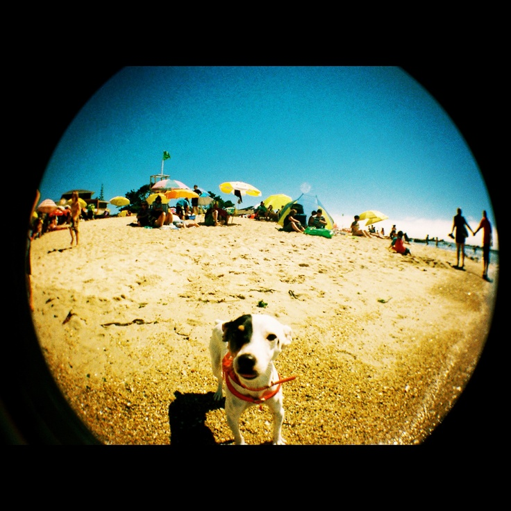 Fish Eye  Jack Russel Terrier  El Quisco. V Región, Chile.