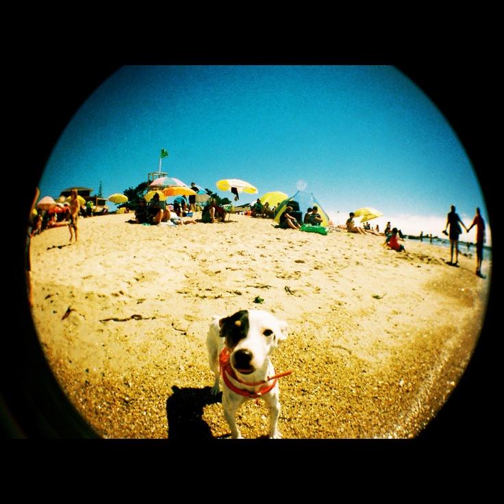 Fish Eye  Jack Russel Terrier  El Quisco. V Región, Chile.