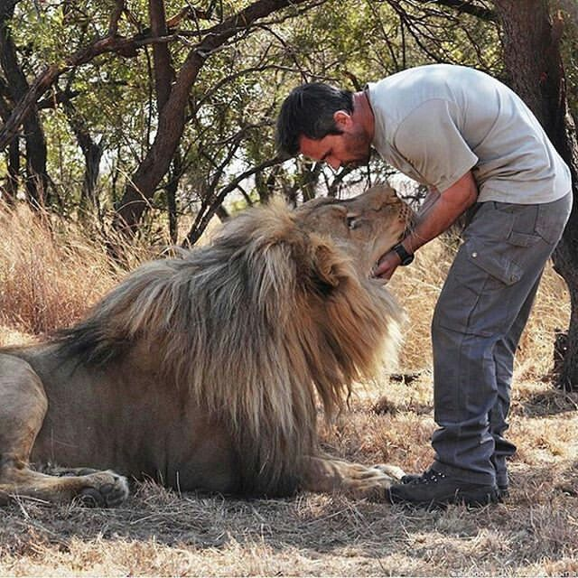 Image result for lion human friendship