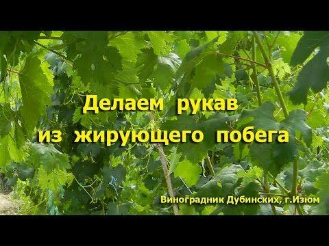 Обрезка винограда весной, летом и осенью