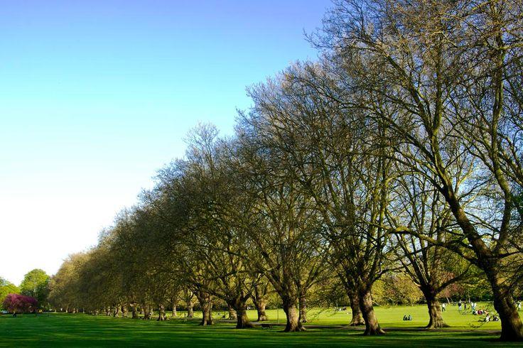 Arbres verts - Jour ensoleillé à Cambridge, Anglaterre, UK, arbres, ciel bleu, déco pour la maison, détendre, couleur, nature, printemps by kpicts on Etsy