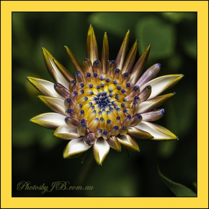 Flower from my garden.