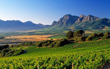 Breathtaking photo of the winelands in the Cape.  Nowhere else like it on earth and the wines are out of this world!