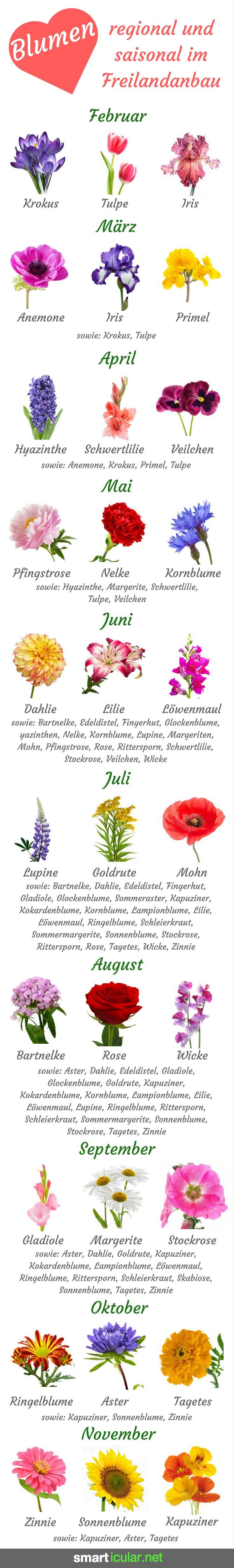 Blumensträuße sind wunderschön und erfreuen das Gemüt, leider verursachen sie auch viele Umweltprobleme. Finde heraus, wie du sie mindern kannst.