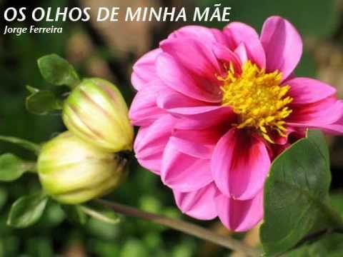 OS OLHOS DE MINHA MÃE