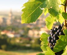 A new study gives insight into how resveratrol—a compound found in grapes, red wine and nuts—may ward off several age-related diseases. The findings could help in the development of drugs to curtail some of the health problems that arise as we get older.