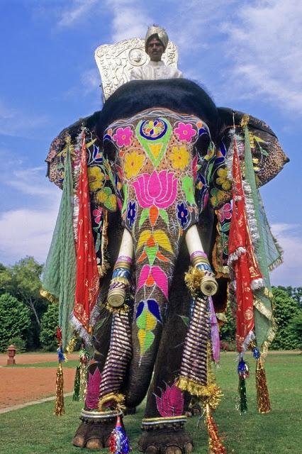 Indian Elephant decorated