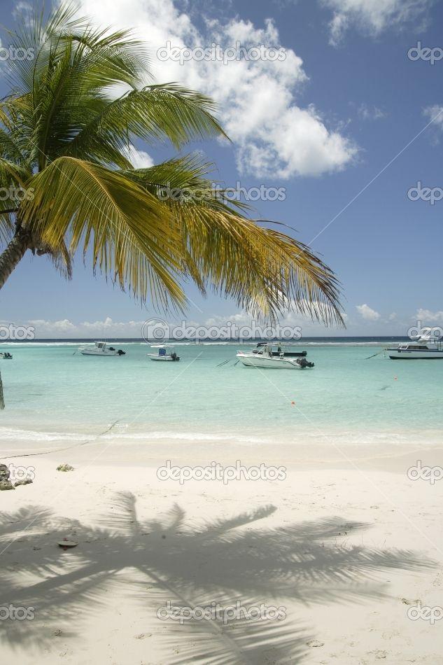 Best 25 Barbados Beach Ideas On Pinterest  Bora Bora Insel Tropical Island