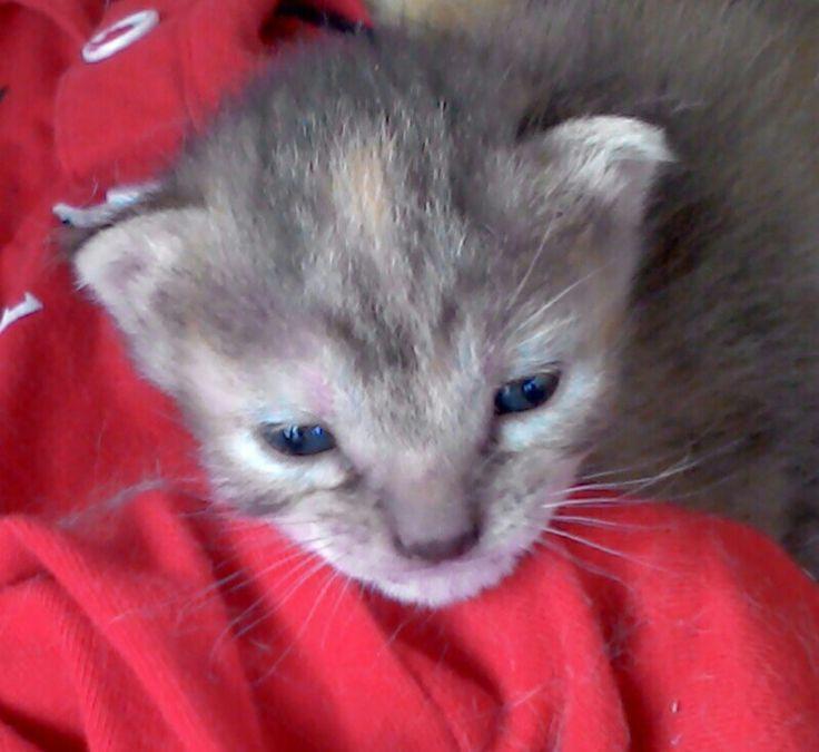 La mia gattina SCARLETT my kitty SCARLETT:-)