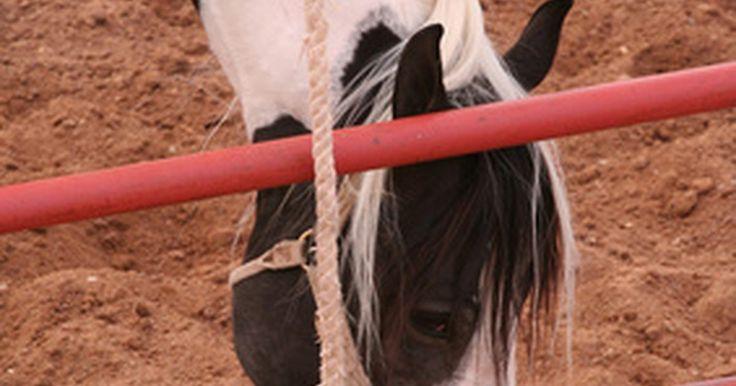 Ideias para divisórias de baias para cavalos. Os cavalos devem ter um abrigo adequado e seguro, que não precisa ser sofisticado. Quando você mesmo constrói os estábulos, vários materiais reciclados ou de baixo custo podem ser uma boa escolha. Porém, é mais importante conhecer quais são as opções seguras. Materiais errados podem ser perigosos para o cavalo e custar caro.