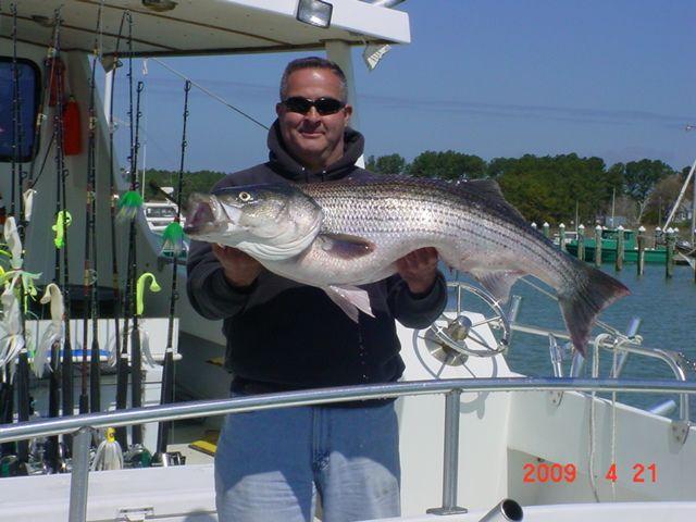 25 best chesapeake bay fishing ideas on pinterest for Chesapeake bay fishing