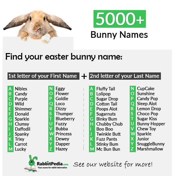 5000 Most Popular Rabbit Names For Your Bunny Rabbitpedia Com Rabbit Names Bunny Names Baby Names Short
