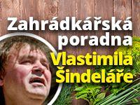 Poradna Vlastimila Šindeláře: záchrana rododendronu i rajčat