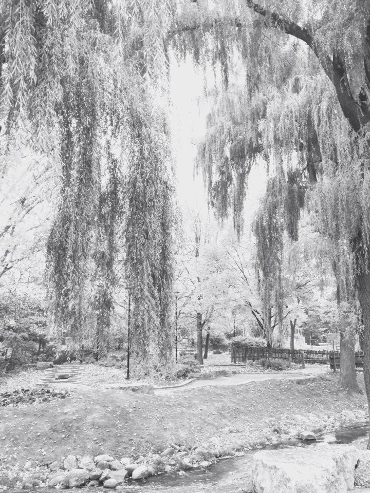 The weeping willows of a no black, no dark world <3