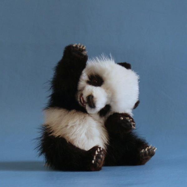 dawww, such a cute panda!