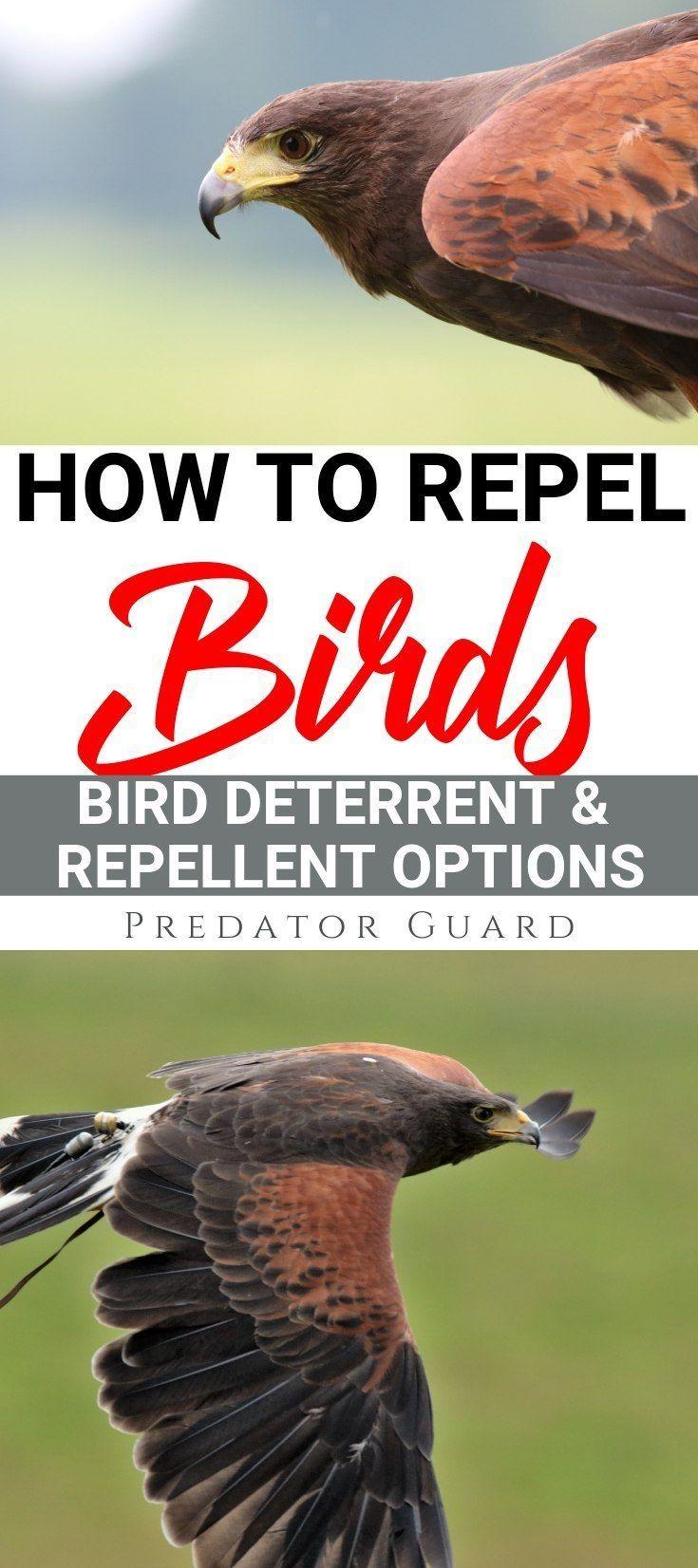 How To Repel Birds - Bird Deterrent & Repellent Options
