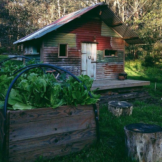 Cos lettuce & cubby house :)