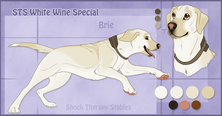 Registered Name: STS Sourdough Silver Call Name: Sisco Gender: Unaltered Male Age: 9 years Height: Average Weight: Hefty/Robust Breed: Labrador Retriever Coat Color: Silver Markings: Solid silvery ...