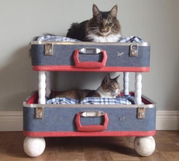 How to Make a Homemade Cat Bed - OneHowto