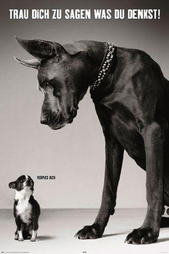 Trau dich was zu sagen Hunde Größe (cm), ca. 61×91,5 Poster, NEU – ribita111