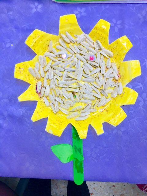 Sunflowers Günebakan  Çiğdem öğretmen