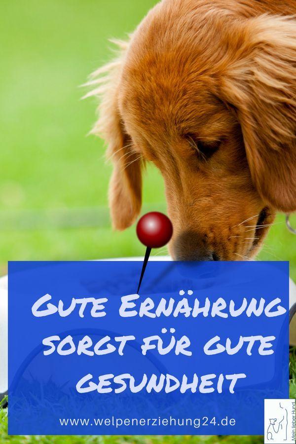 Die Ernahrung Des Welpen Welpen Welpenerziehung Hunde Erziehen