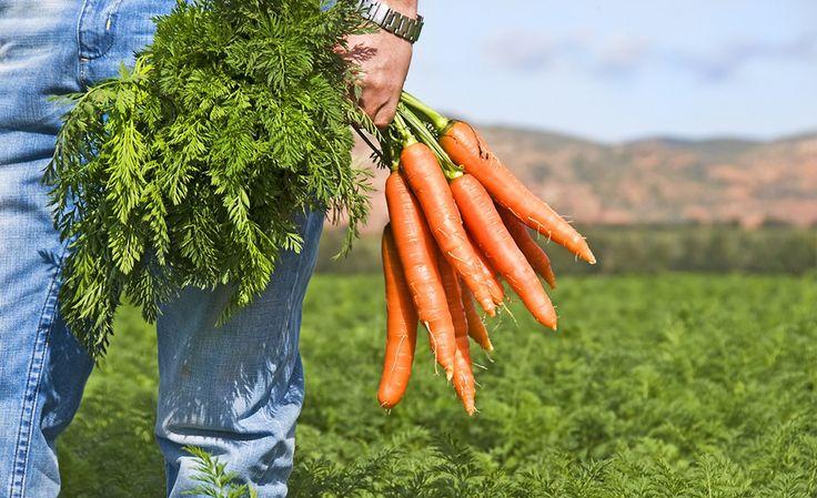 """Вот воистину, никогда не знаешь, какое дело """"выстрелит"""". Кто бы мог подумать, что отходы от производства могут не только принести хорошую выгоду, но и стать одним из востребованных и популярных товаров?  Калифорнийский фермер Майк Юрошек, в очередной раз выбрасывая некондиционную морковь, задумался - но ведь морковка-то хорошая, всего-то внешний вид подкачал - кривенькая или немного поломанная. Жалко ведь выбрасывать!  Но как сбыть, если все хотят именно красивую и целую? Думал он, думал, и…"""