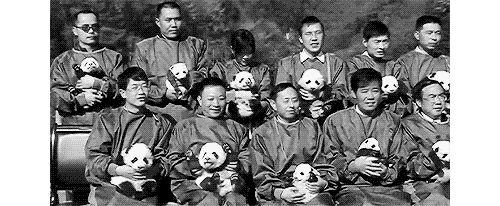 Endangered Panda Species Gif #7751 - Funny Panda Gifs| Funny Gifs| Panda Gifs