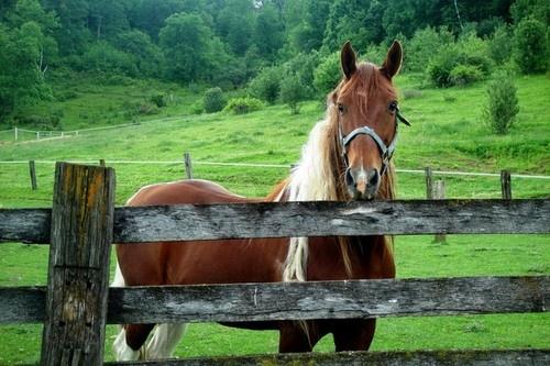 ~*Harmony n' Nature*~: Pferde Horses, Pferd Hors, Mane Love Horses, Majestic Horses, Animal