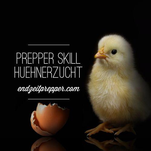 Prepper Skill - Hühnerzucht auf endzeitprepper.com                                                                                                                                                     Mehr