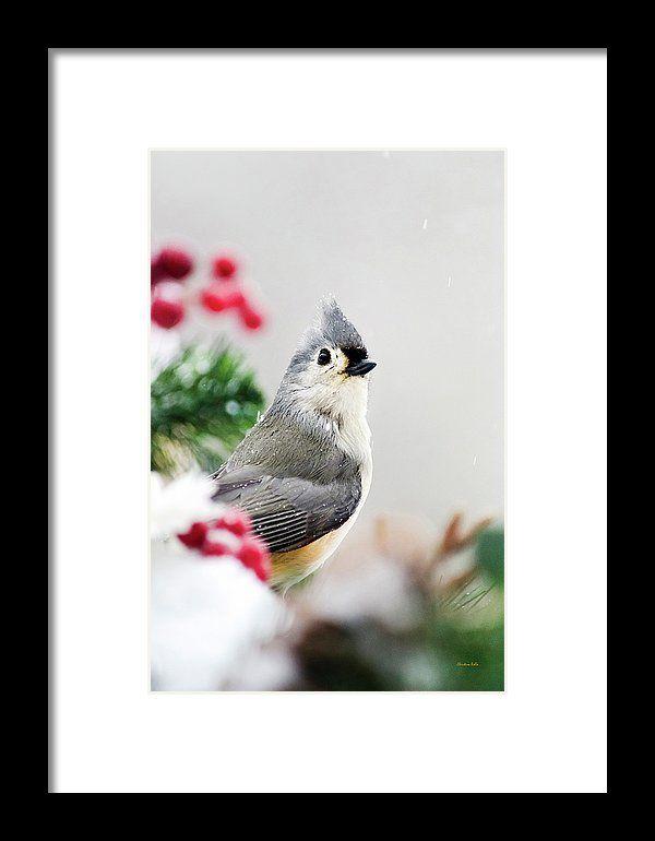 Titmouse Bird Portrait Framed Print By Christina Rollo Titmouse Bird Portrait Frame Framing Photography