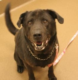 Kansas Humane Society - Bruce - Available for Adoption in Wichita, KS - (316) 524-9196