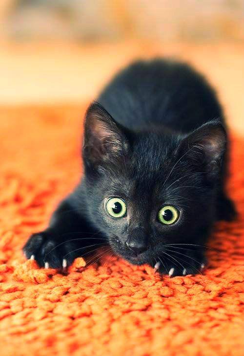 Halloween Kitten sees a ghost! :O