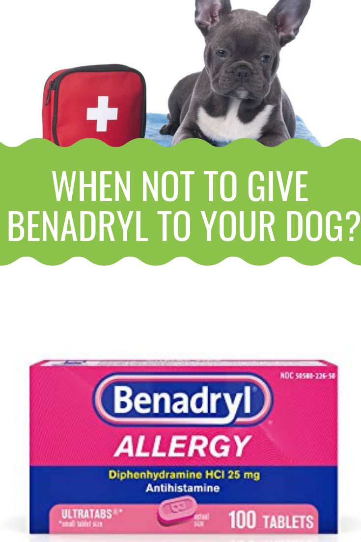How Much Benadryl Can I Give My Dog | Benadryl for dogs ...