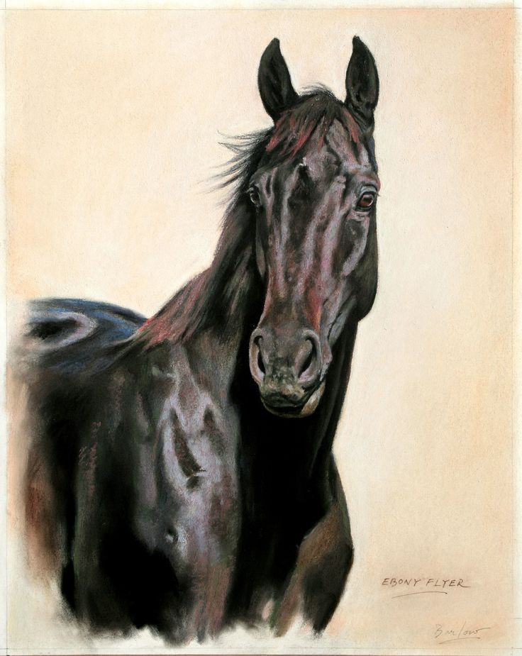 Ebony Flyer,  champion racehorse out of Jet Master, painted for Barry Irwin of Team Valor. Stands at Drakenstein Stud, Franchhoek, South Africa.