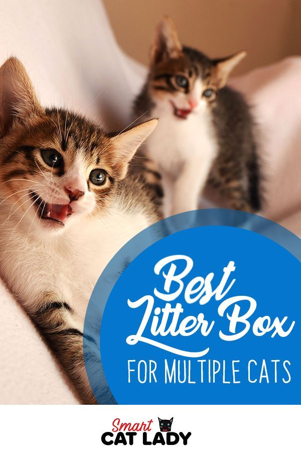 Best Litter Box For Multiple Cats Best Litter Box Cats Sleeping Funny Cat Training Scratching